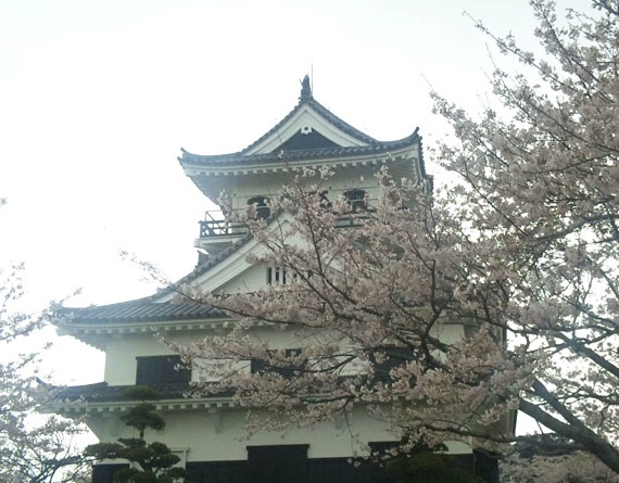 館山城:千葉県最南端の里見義頼によって築城された館山城【お城特集 日本の歴史】